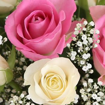 fairtrade-roses-R2350C